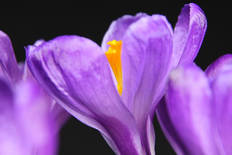 Flower 075a
