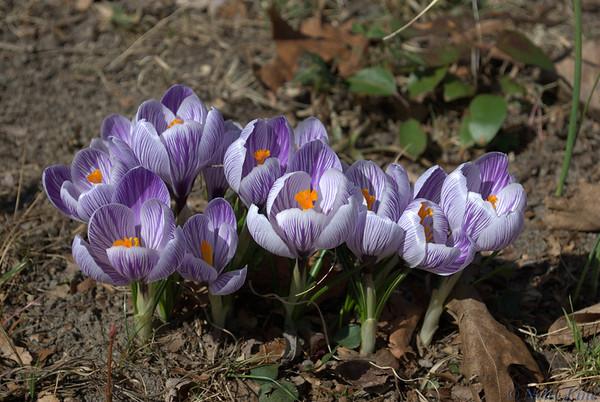 110525_Flowers