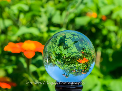 Crystal Ball Flowers 25 July 2019-5607