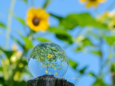 Crystal Ball Flowers 25 July 2019-5558