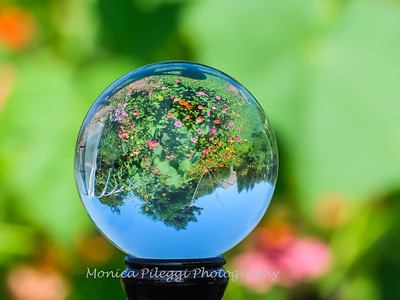 Crystal Ball Flowers 25 July 2019-5535
