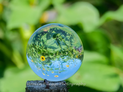 Crystal Ball Flowers 25 July 2019-5556
