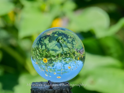 Crystal Ball Flowers 25 July 2019-5553
