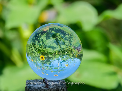 Crystal Ball Flowers 25 July 2019-5555