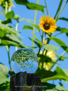 Crystal Ball Flowers 25 July 2019-5565