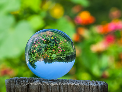 Crystal Ball Flowers 25 July 2019-5548