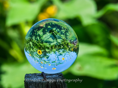 Crystal Ball Flowers 25 July 2019-5551