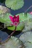 100_2633 Red WL SSS original_edited-1