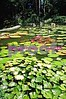 00450007 Asian Garden lily pads small copy