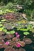 100_2661Asian WL pond vert Sept 06