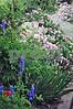 00870024 Street garden Oakwood Raleigh 2