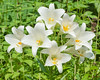 Easter Lily in full bloom in Rick's garden.  This lily was originally a gift from Ann and Dick Oberer - thanks, guys!