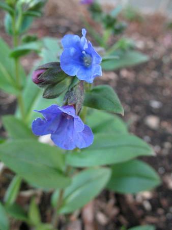 Garden Spring 2007