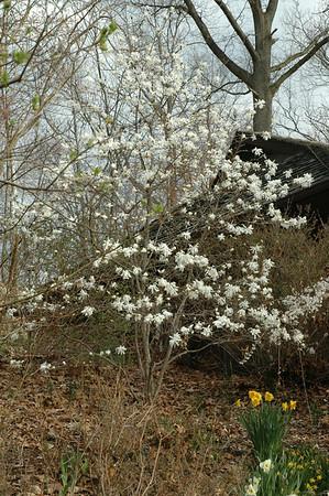 Garden Spring 2008