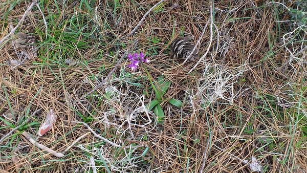 Cyprus flora, March 2012