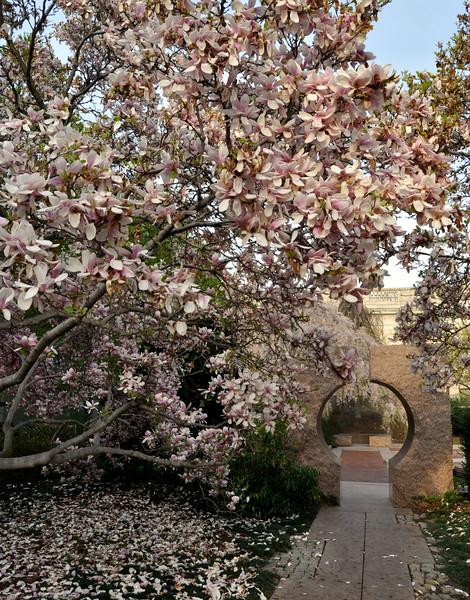 Moon Gate Garden