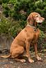 NYSSA, THE GUARD-EN DOG