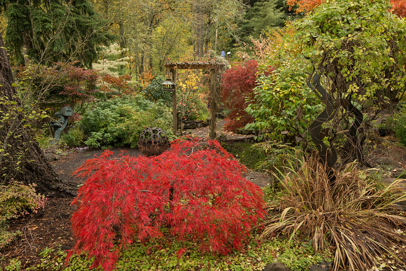 FALL COLOR AT DEERLY MISSED GARDEN