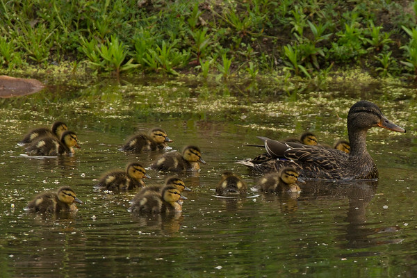 FAMILY GATHERING ON THE POND