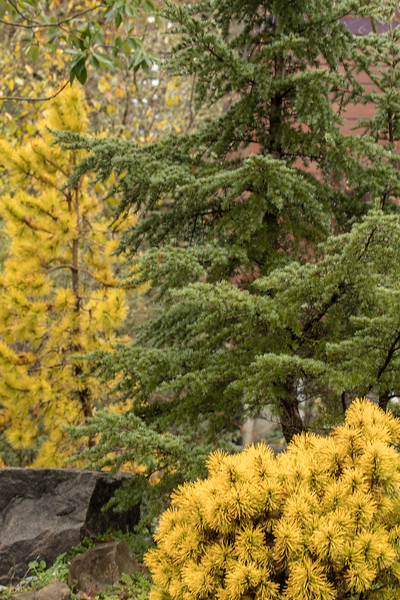 CAPTIVATING CONIFERS