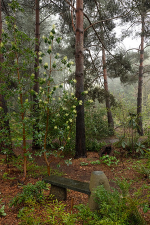 MORNING IN THE PINES