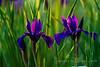 Purples 'n Greens