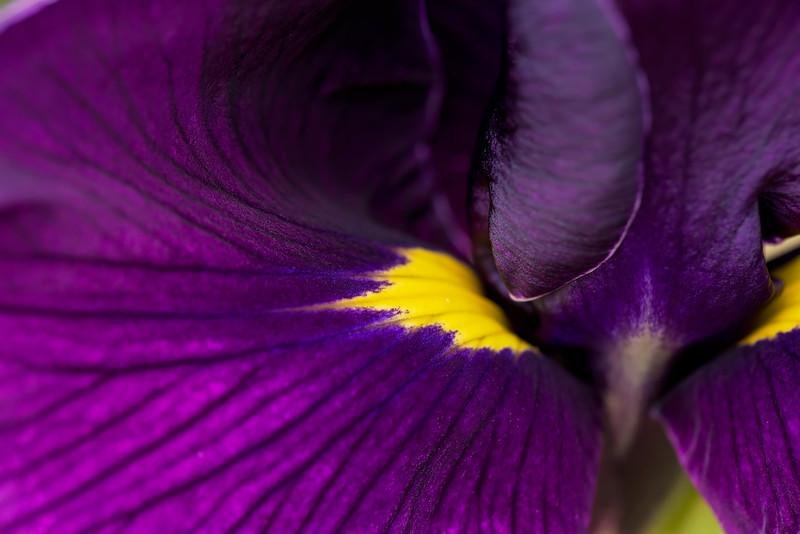 The Heart of Purple