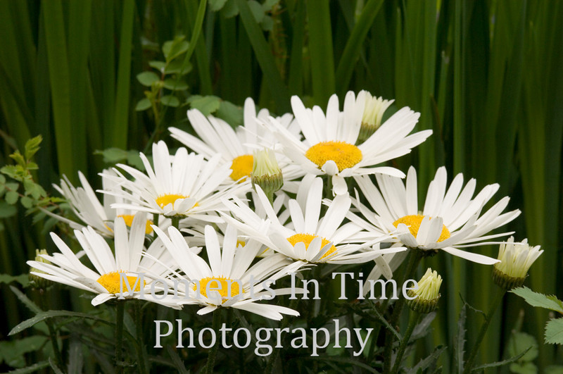 Daisy grouping