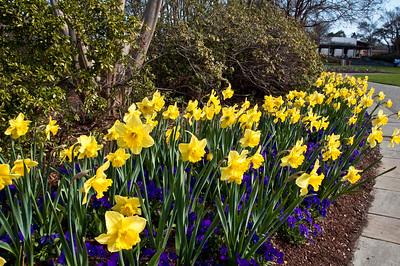 Dallas Arboretum - March 6, 2010