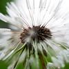 Unloved Flower - 2020