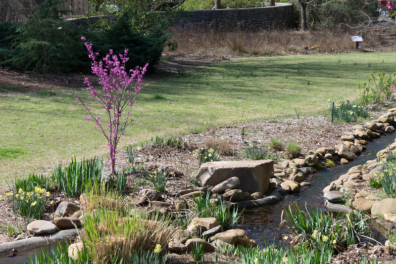 Redbud and brook