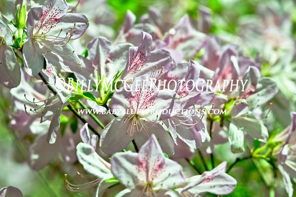 Winterthur Flower Gardens - 01 May 10