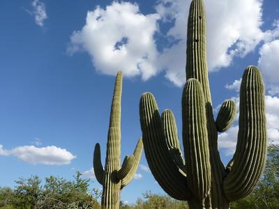 Desert Botanical Garden - Phoenix - 30 Mar. '16