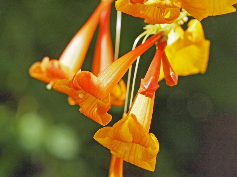 flower - cora_matt_garden