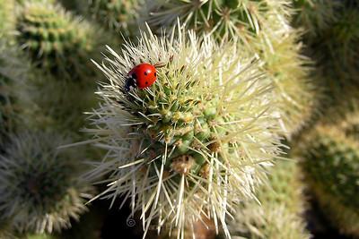 Ladybug on cactus