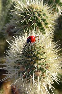 Cactus and Ladybug