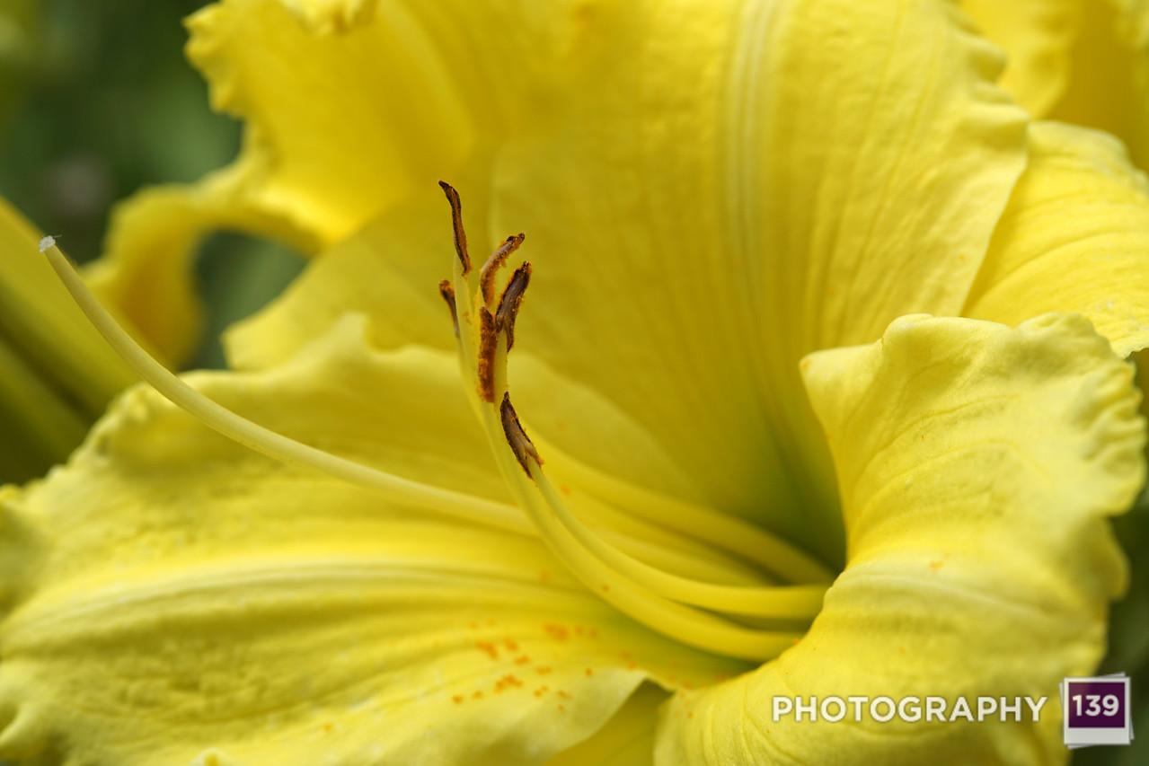 Donna Jones' Flowers