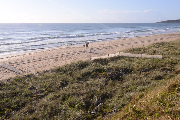 Dune repair and vegetation