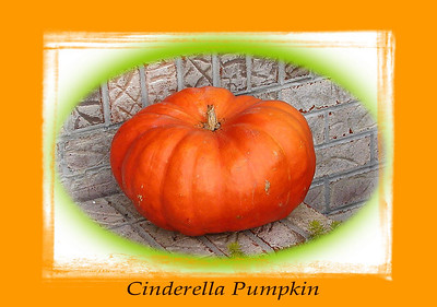 My Cinderella Pumpkin. It is an heirloom variety. I will be saving the seeds for planting and sharing.