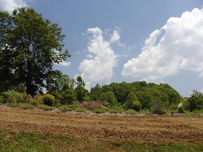 Erin's Meadown on a Blue Sky Day<br /> Erin's Meadow Herb Farm<br /> Clinton, TN<br /> 6/20/07