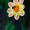 Bee Keeper 7473 w32