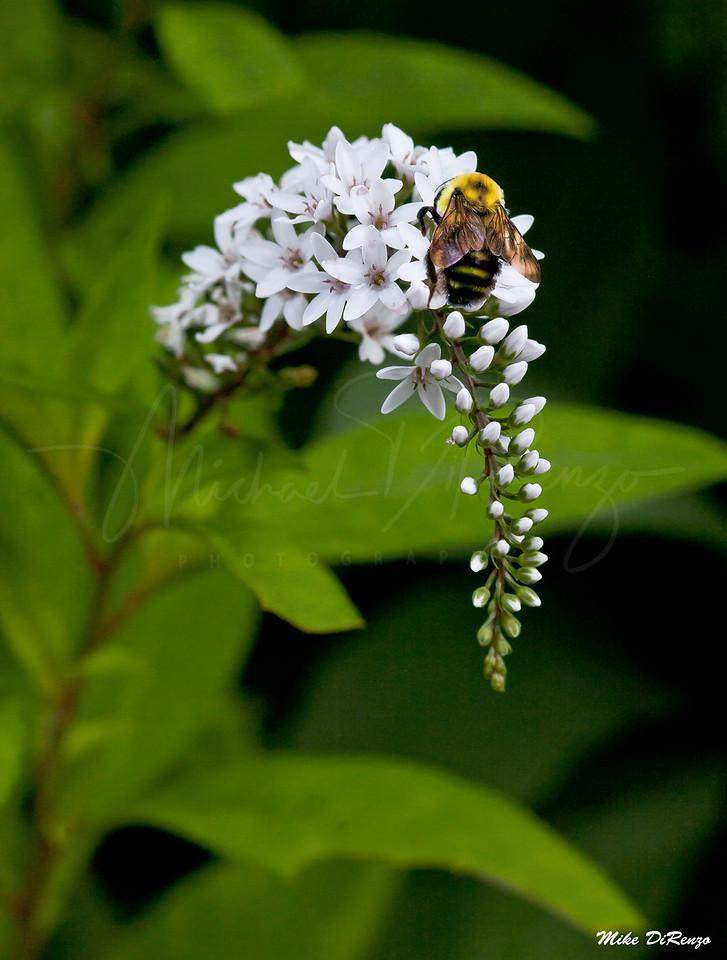 Bee  Careful  2931  w31