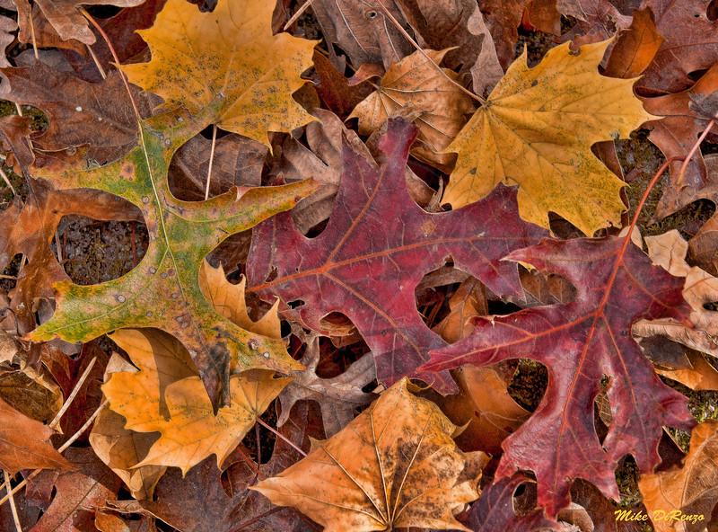 Autumn  Leaves  8431