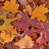 Leaves 8431