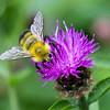 Pollen Run 4224 w38