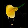 Honey Dripper  9326 w24