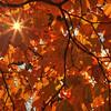 Autumn Sun  7953