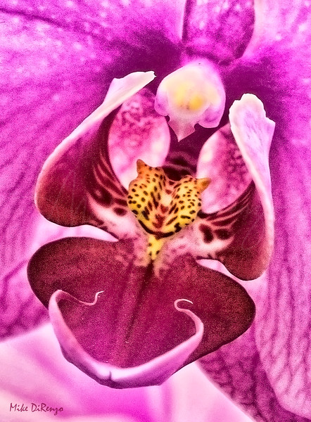 Orchid  4106  w20