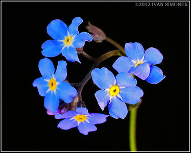 """FORGET-ME-NOT 2"", Wrangell,Alaska,USA."