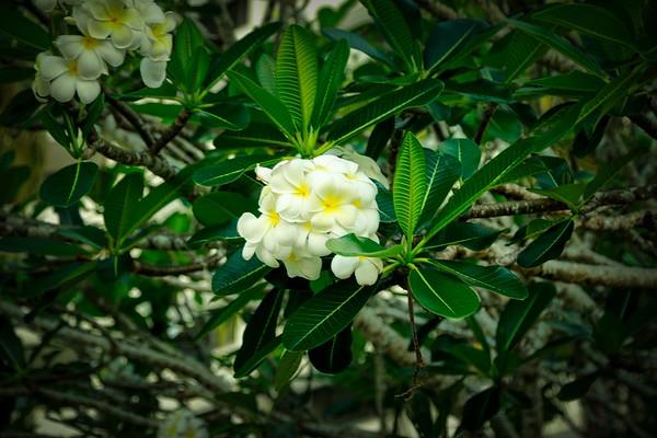 FLOWERS OF GUAM
